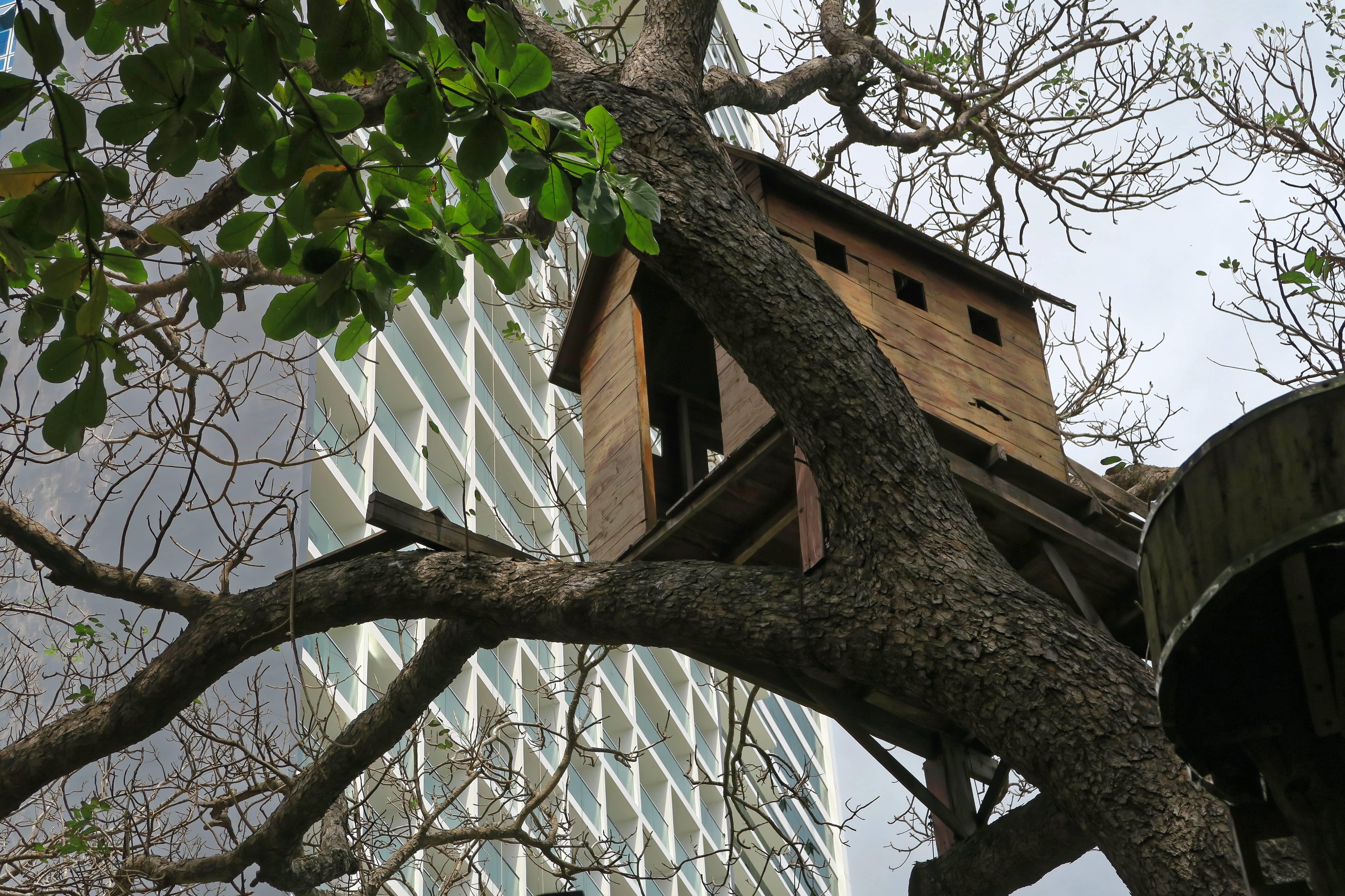 Ihr Traumhaus im Baum